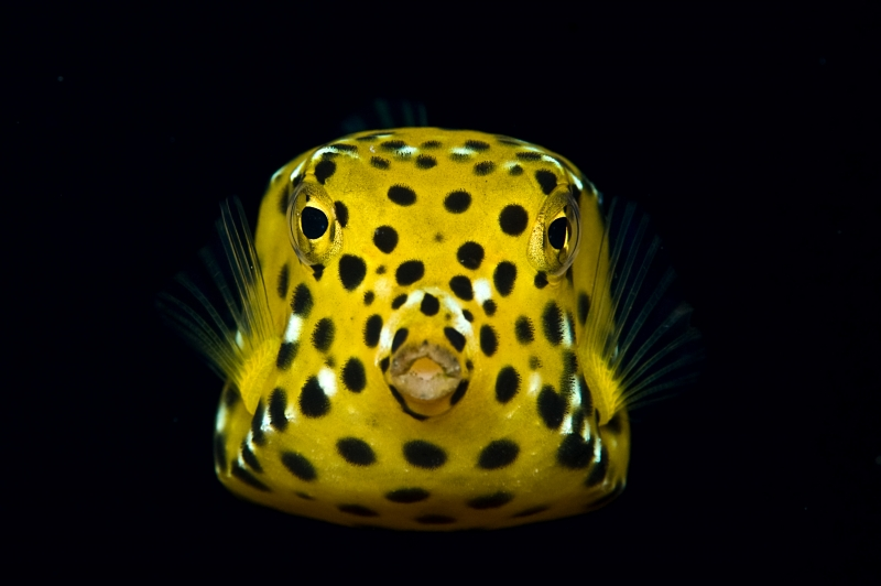 DEEP Indonesia International Underwater Photo Competition 2009 Winning Image by Amir