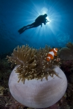 Clownfish and Diver Sunburst by Andrew Sallmon (United States)