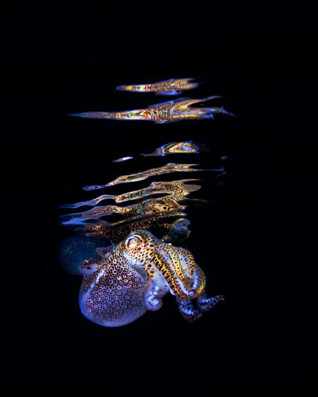 Our World Underwater 2013 Winning Image by Todd