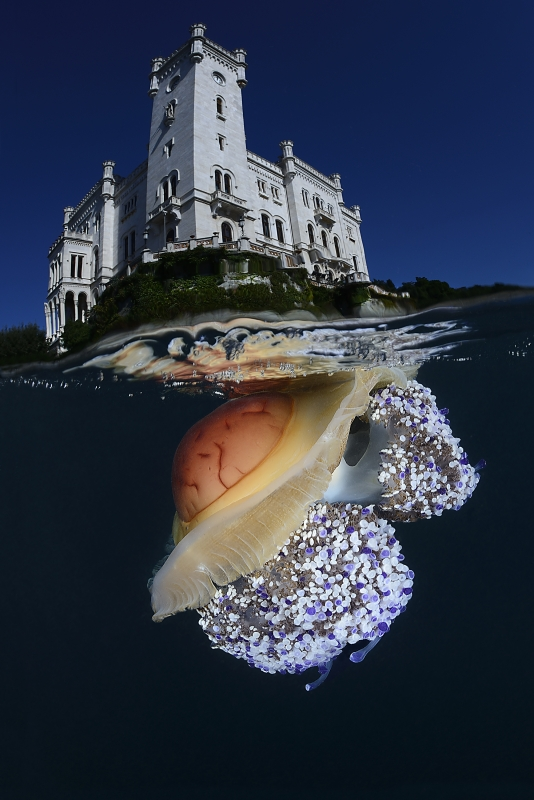 Our World Underwater 2014 Winning Image by Adriano