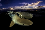 SUNSET SHARK by Vincent Truchet (French Polynesia)