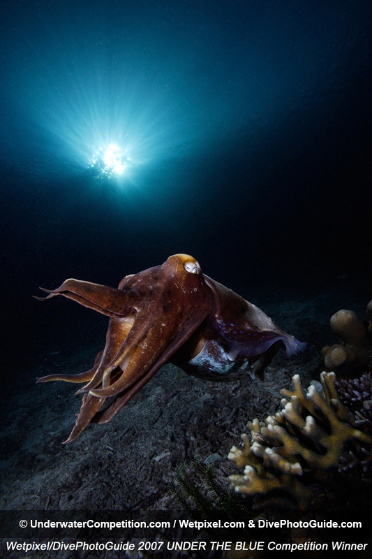 Under The Blue International Underwater Photo & Video Competition Winning Image by Yeang Chng
