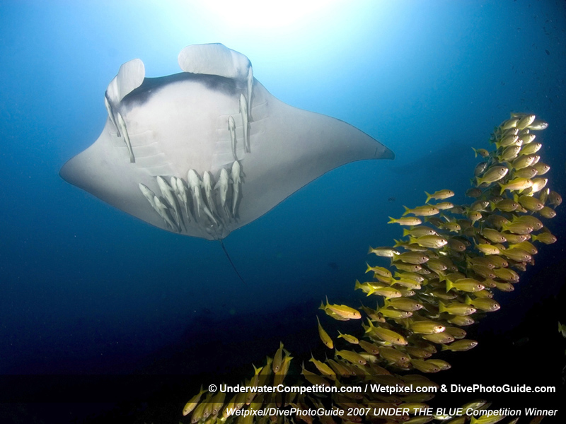 Under The Blue International Underwater Photo & Video Competition Winning Image by Jose Angel Fernandez Esparza