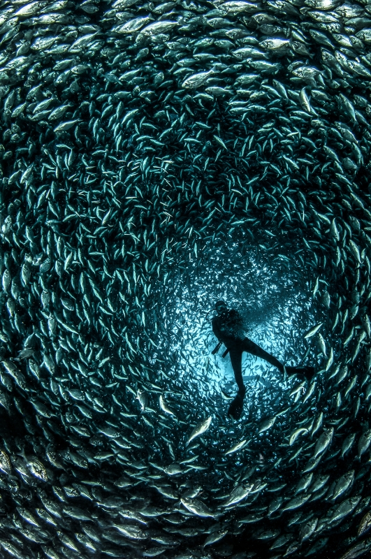DEEP Indonesia 2016 Winning Image by Isabella