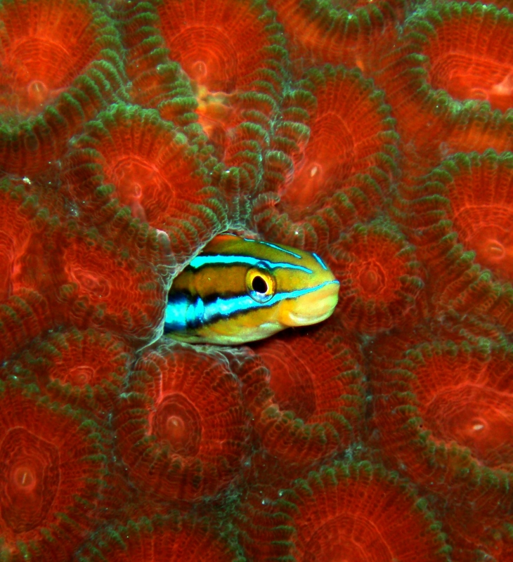 DEEP Indonesia International Underwater Photo Competition 2009 Winning Image by Sue
