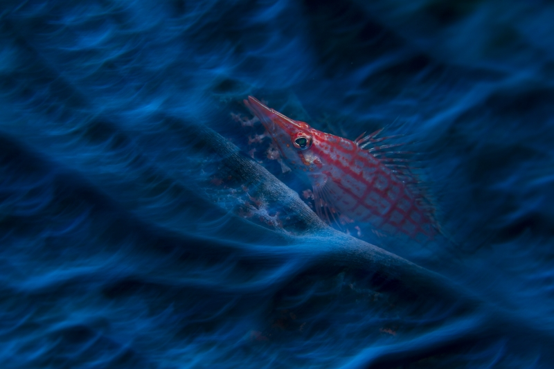DPG/Wetpixel Masters Underwater Imaging Competition 2020 Winning Image by Joe
