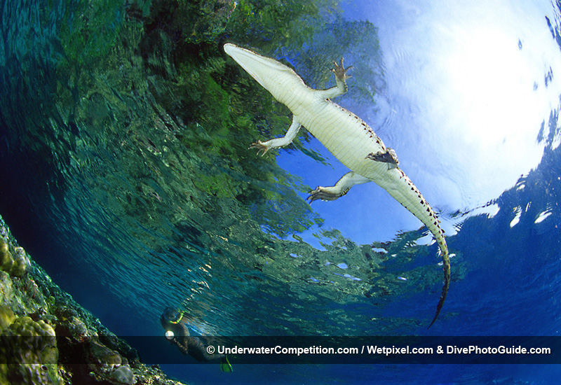Our World Underwater 2006 Winning Image by Alessio