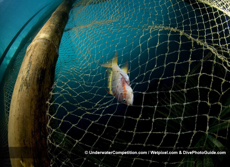 Our World Underwater 2008 Winning Image by Aaron