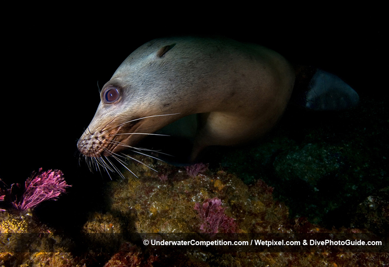 DEEP Indonesia International Underwater Photo Competition 2007 Winning Image by Rick Coleman