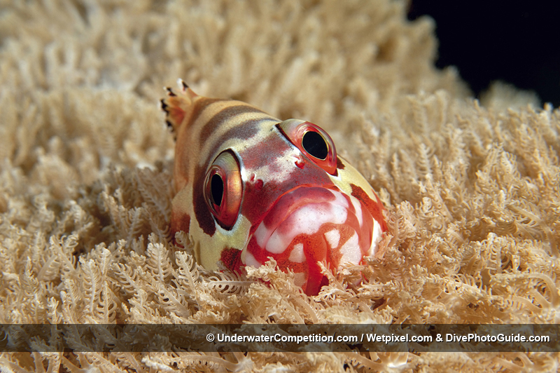 DEEP Indonesia International Underwater Photo Competition 2008 Winning Image by Steven