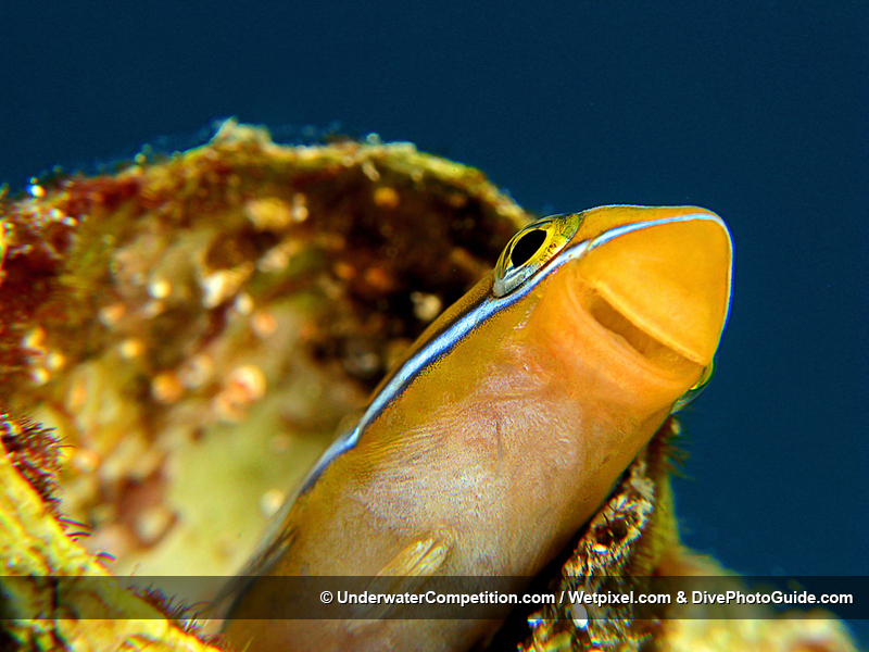 DEEP Indonesia International Underwater Photo Competition 2008 Winning Image by Edvin