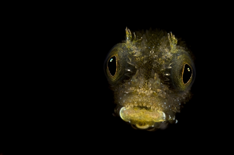 DEEP Indonesia International Underwater Photo Competition 2009 Winning Image by Keri