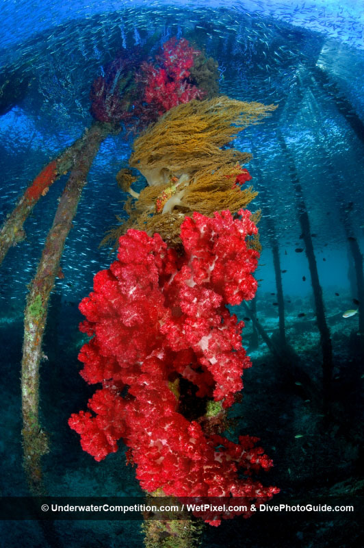 DEEP Indonesia 2010 Winning Image by Adriano