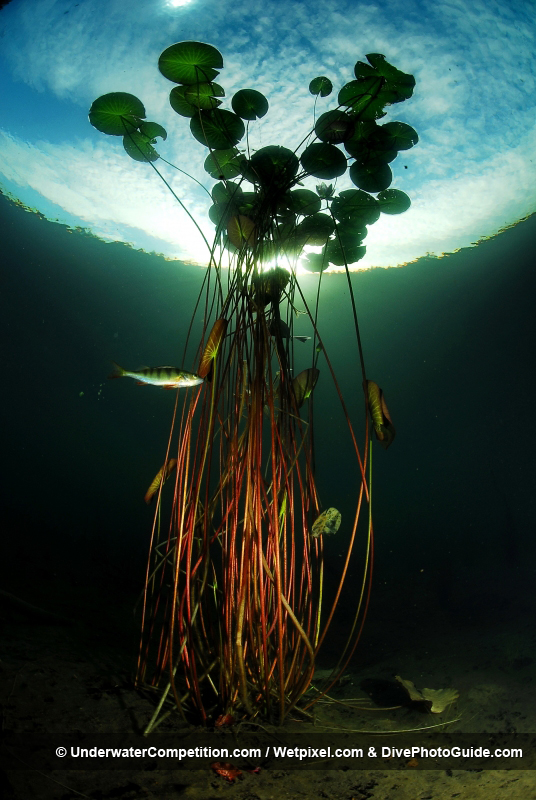 Our World Underwater 2010 Winning Image by Fredrik