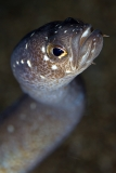 Garden eel closeup by EunJae Im (South Korea)